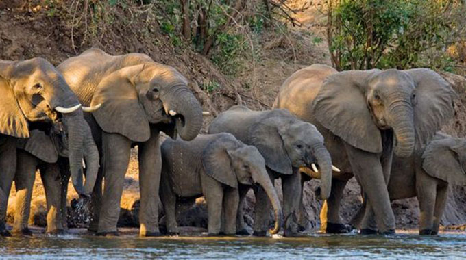 Anti-poaching Unit Mourns Officer Killed By Bull Elephant